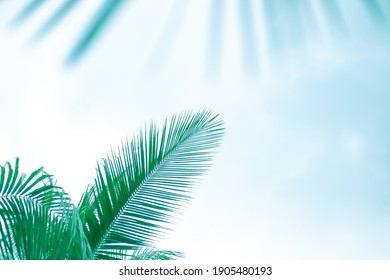 green palm leaves on a light blue background, toned template for text, frame.