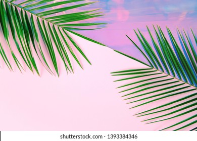 Green palm leaves on pastel colored holographic and pink diagonal divided background. Tropical conceptual minimal surreal summer layout. Flat lay design with copy space.