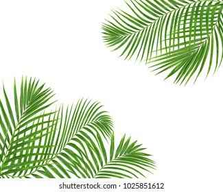 green palm leaves on white backgroung