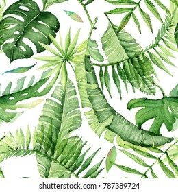 Green palm leaves on the white background. Tropical watercolor illustration. Jungle foliage.