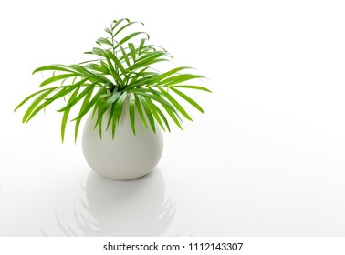Green palm leaves in a white ceramic vase, on white background, with reflection.