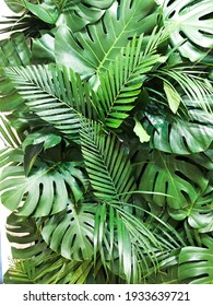 Green palm with monstera ,leaves in a pile close-up.
