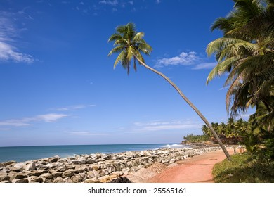 Green palm on the beach in India, Kerala over ocean and blue sky