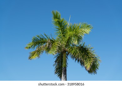Green Palm Tree Against Blue Sky Background.