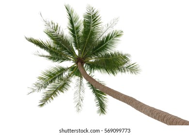 Green palm tree isolated on white background