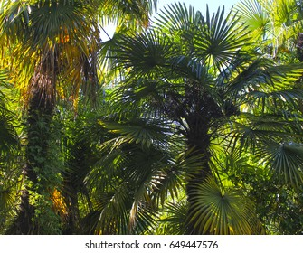Green palm tree leaves background