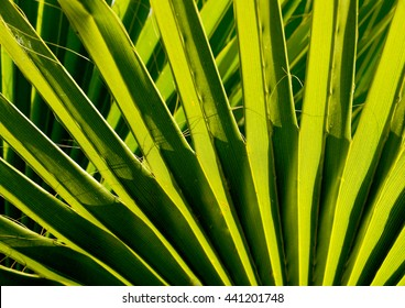 Green palm tree leaves close up for background. Plant textures.