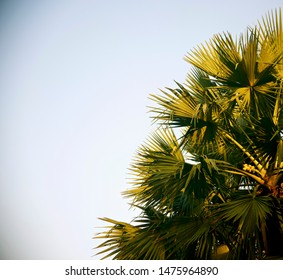 Green palm tree leaves with sky background photo
