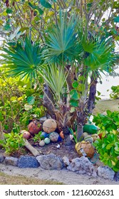 Green palm tree with multi-colored buoys on the Island of Eleuthera in the Bahamas