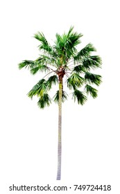 The green palm tree in the nature with the white background or isolated.