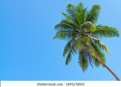 Green palm tree on clean blue sky background with space for text or image