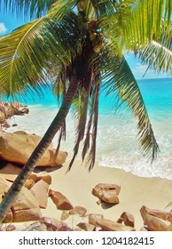 A green palm tree over a white sandy beach with rocks in the side and blue turquoise ocean water in the background with little waves breaking. Paradise island, Seychelle Islands