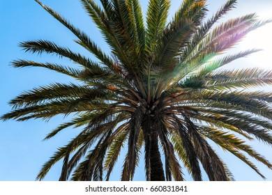 Green palm tree in sun beams