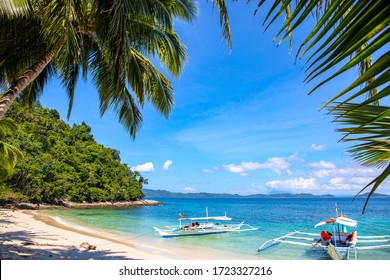 Green palm tree and white beach on sunny day. Tropical island paradise photo. Philippine island hopping tour. Exotic place for summer vacation. South Asia travel. Tourist resort relaxing view
