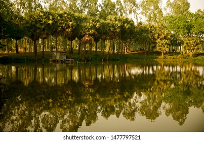 Green palm trees around a lakeshore area natural photo
