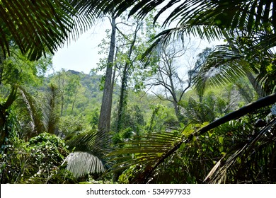 Green palm trees in forest Thailand
