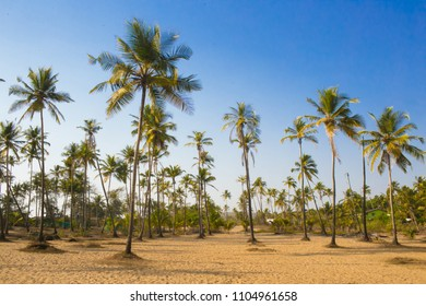 Green palm trees grow out of the yellow sand on the background of the blue sky with small village.