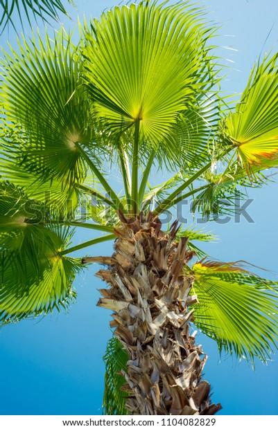 Green palm tree's leaf against blue sky background. Tropical summer landscape