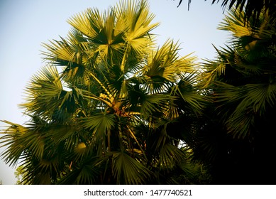 Green palm trees with leaves unique natural photo
