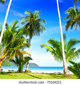 Green palm trees on the grass near the beach. Exotic vacations.