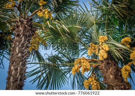 Green palm trees yellow flowers on stock photo edit now 776061922 green palm trees with yellow flowers on the beach mightylinksfo