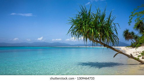 Green palm variety casting shadow over tropical beach sea - Bonbon Beach -  Romblon, Philippines