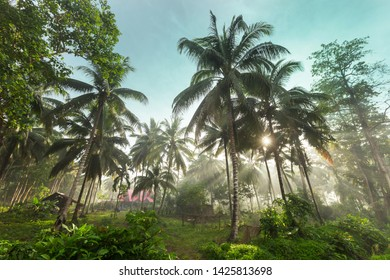 Green Palms on tropical beach