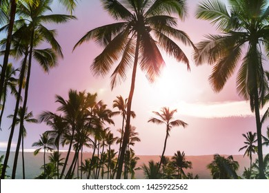 Green Palms on tropical beach
