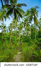 Green palmtrees in the jungle.
