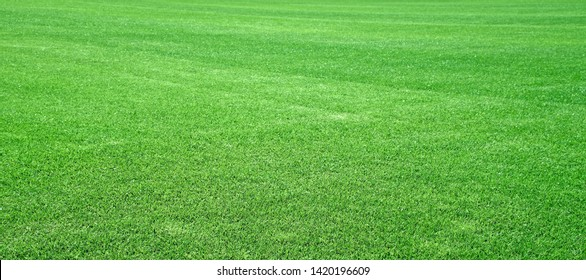 Green panoramic lawn of a football field