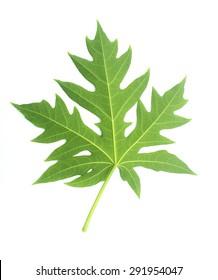 Green Papaya leaf isolated on white