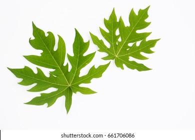 the green papaya leaf on white background