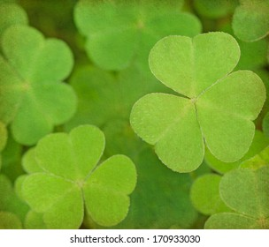 green paper  background with  three-leaved shamrocks