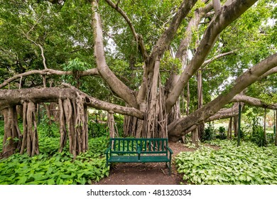 A green park bench in front of a large banyan tree