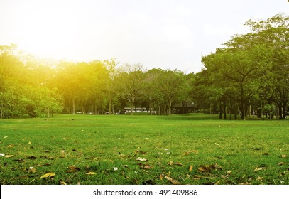 Green Park in City at Sunset. exercise and relax. Green grass and tree in garden at sunset background.