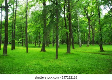 Green park, forest background, spring lawn