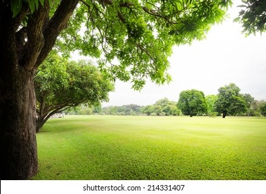 Green park with fresh grass and trees at summer season