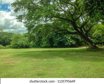 Green park with lawn and old big tree in the garden for background.