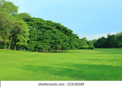 Green park outdoor