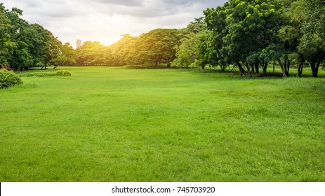 Green Park. Green tree and grass in urban City at Sunset.