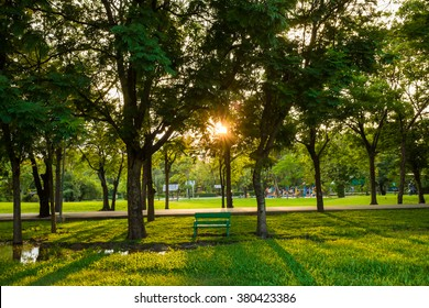 Green park tree outdoor with bench sunlight