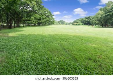Green park at Vachirabenjatas Park (Rot Fai Park) Bangkok, Thailand