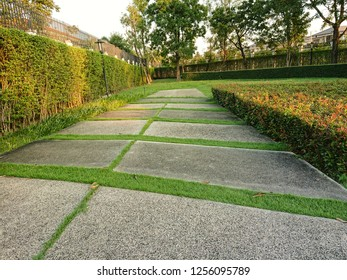 green park and walkway for relaxation with evening sunlight. landscape design for garden.