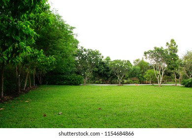 Green parks grass field and tree
