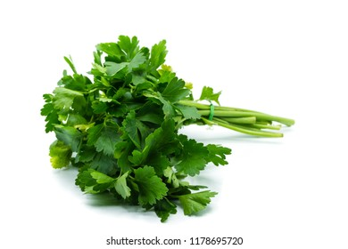 Green parsley bunch isolated on white background