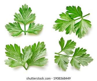 Green parsley leaf isolated on white background. Parsley leaf macro studio photo