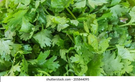 Green parsley leafs