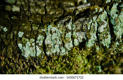 Green parts of a tree with textures unique background photo