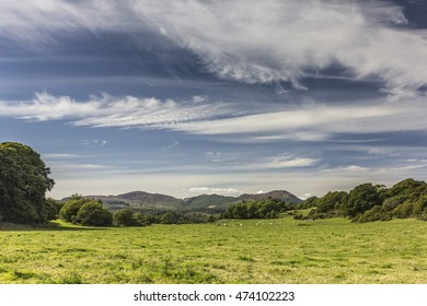 Green pasture field of cows and cloudscape near Auchencairn, Dumfries and Galloway, Scotland, UK.