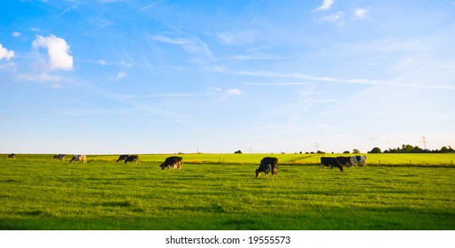 green pasture with grazing cows and blue cloudy sky